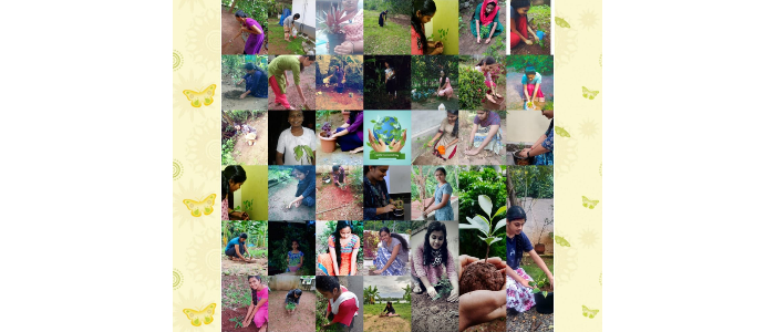 Planting saplings by students