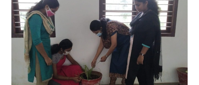 Saplings planting